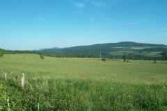 L'été dans les champs